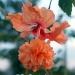 Продам Красивые комнатные цветы